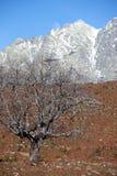 Árbol en Sierra de Gredos Imagen de archivo libre de regalías