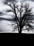 árbol en silueta en una tarde cubierta Imagenes de archivo