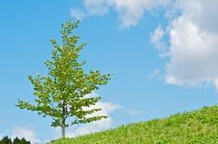 Árbol en sol Imagen de archivo libre de regalías