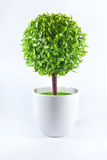 Árbol en taza Foto de archivo