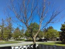 Árbol en tiempo agradable Imagen de archivo libre de regalías