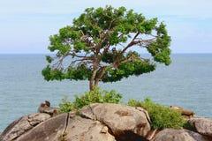 Árbol en un acantilado Imagen de archivo libre de regalías