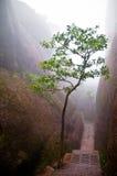 Árbol en un camino de la montaña Fotografía de archivo libre de regalías