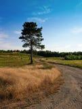 Árbol en un camino de tierra Fotos de archivo