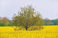 Árbol en un campo fotografía de archivo libre de regalías