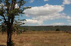 Árbol en un campo Fotografía de archivo