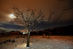 Árbol en un campo de nieve en Bustarviejo imagen de archivo libre de regalías
