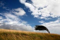 Árbol en un campo deformido por el viento Imagen de archivo libre de regalías