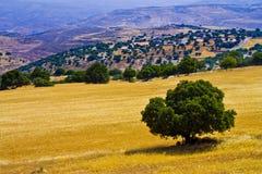 Árbol en un campo del trigo Fotografía de archivo