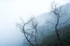 árbol en un campo, estación del invierno imagen de archivo