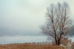 árbol en un campo nevoso Fotos de archivo