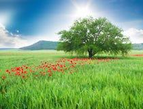 Árbol en un campo y flores salvajes. Foto de archivo libre de regalías