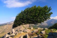 Árbol en un canto ventoso Fotografía de archivo