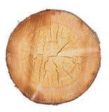 Árbol en un corte imagen de archivo