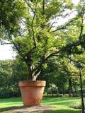 Árbol en un crisol Fotografía de archivo libre de regalías
