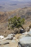 Árbol en un desierto Imágenes de archivo libres de regalías