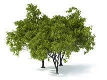 Árbol en un fondo blanco Imágenes de archivo libres de regalías