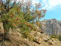 Árbol en un fondo de montañas Imagen de archivo