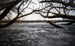 Árbol en un lago del invierno Fotos de archivo