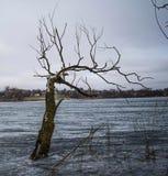 Árbol en un lago del invierno Imágenes de archivo libres de regalías
