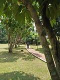 Árbol en un parque Imagenes de archivo