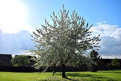 Árbol en un parque -- imagenes de archivo