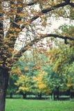 Árbol en un parque Fotos de archivo