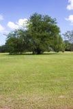 Árbol en un parque Fotografía de archivo
