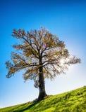 Árbol en un prado Foto de archivo libre de regalías