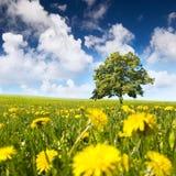 Árbol en un prado Imagen de archivo libre de regalías