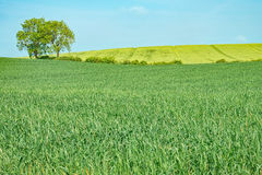 Árbol en un prado verde Fotografía de archivo libre de regalías