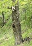 Árbol en un prado verde con una cara en ella Fotos de archivo libres de regalías