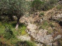 Árbol en un río en el campo Fotos de archivo