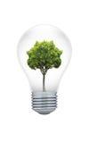 Árbol en una bombilla Imagen de archivo libre de regalías