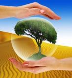 Árbol en una burbuja en la mano libre illustration