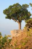 Árbol en una colina Imagen de archivo libre de regalías