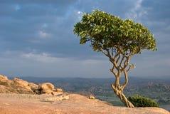 Árbol en una colina Fotografía de archivo