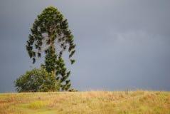Árbol en una colina imágenes de archivo libres de regalías