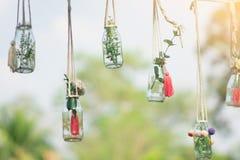 Árbol en una ejecución decorativa de la botella de cristal fotografía de archivo