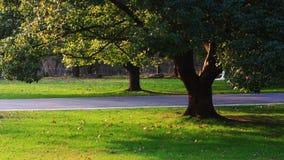 Árbol en una hierba Imagen de archivo