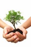 Árbol en una mano Fotos de archivo
