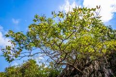 árbol en una montaña superior foto de archivo libre de regalías