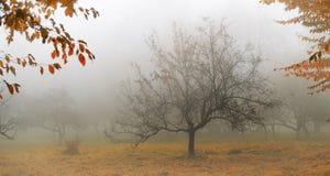Árbol en una niebla. Imagenes de archivo