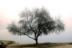 Árbol en una niebla Foto de archivo libre de regalías
