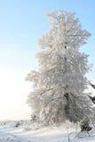 Árbol en una nieve por la tarde del invierno Fotografía de archivo