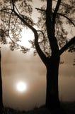 Árbol en una orilla del lago en niebla imagenes de archivo