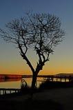 Árbol en una orilla del río Fotos de archivo libres de regalías