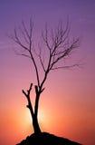 Árbol en una puesta del sol fotos de archivo