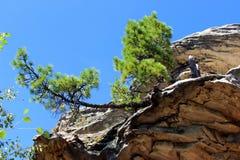 Árbol en una roca foto de archivo