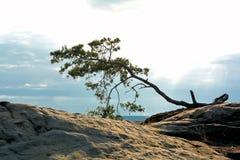 Árbol en una roca Imagen de archivo libre de regalías